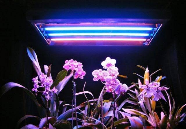 Светильники для растений на подоконнике