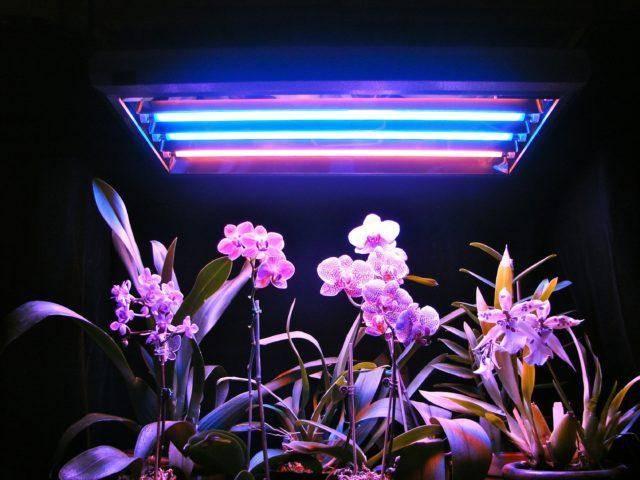 Свет для растений светодиодный