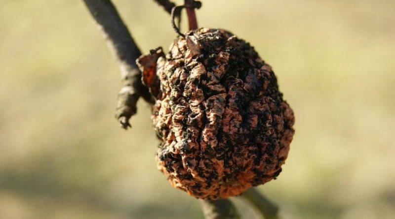 Чем обрабатывать плодовые деревья осенью