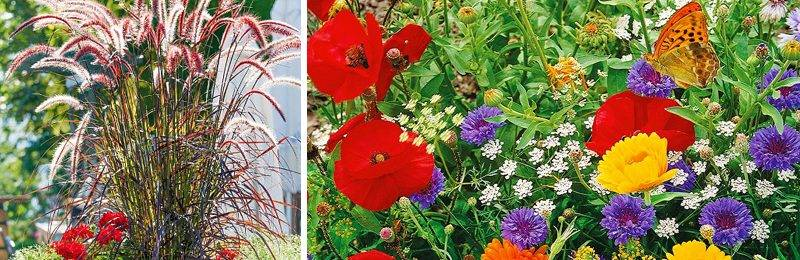 Оранжевые цветы на клумбе — Сад и огород