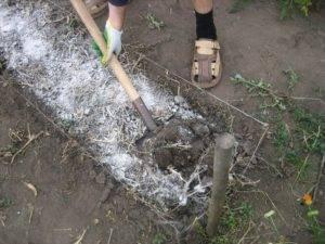 Когда сыпать доломитовую муку на огороде