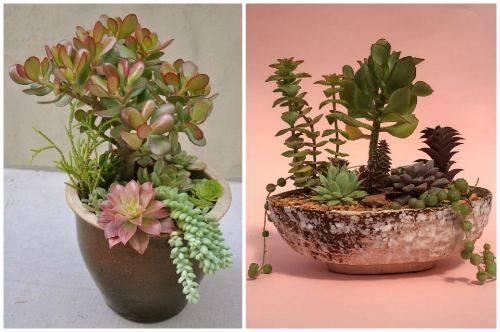 Композиции из кактусов и суккулентов фото