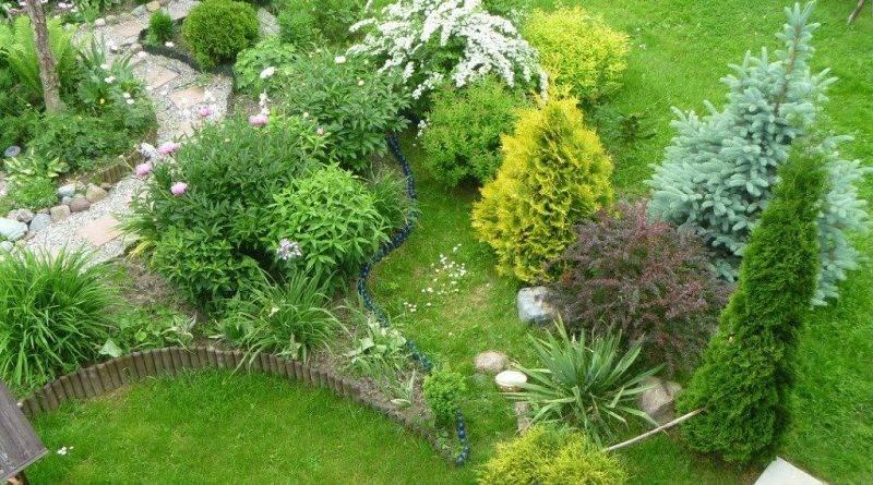 Клумба из хвойных растений схема