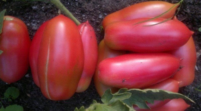 Сколько растут тюльпаны дома