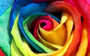 Как делают разноцветные розы