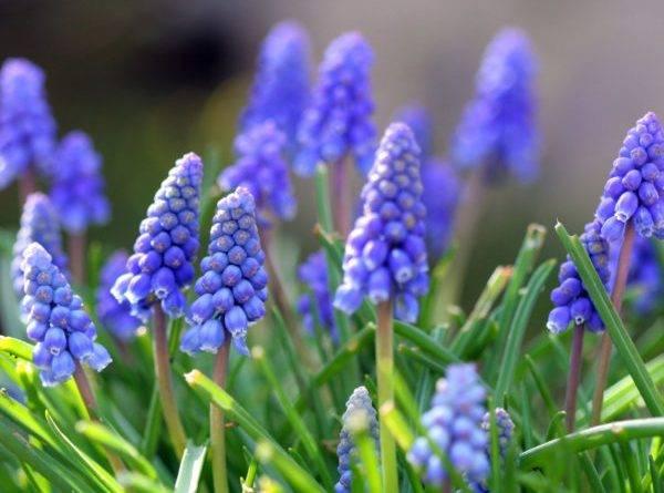 Самые ранние цветы весной на даче
