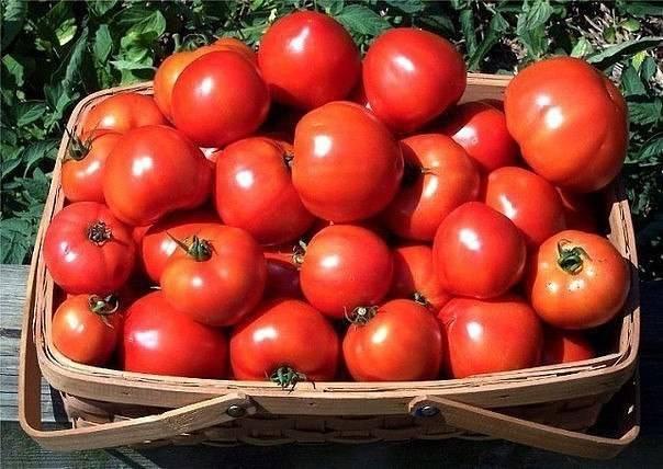 Какой вкус у помидора