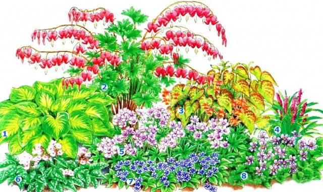 Клумба непрерывного цветения из многолетников фото