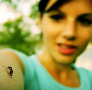 Полезные и вредные насекомые
