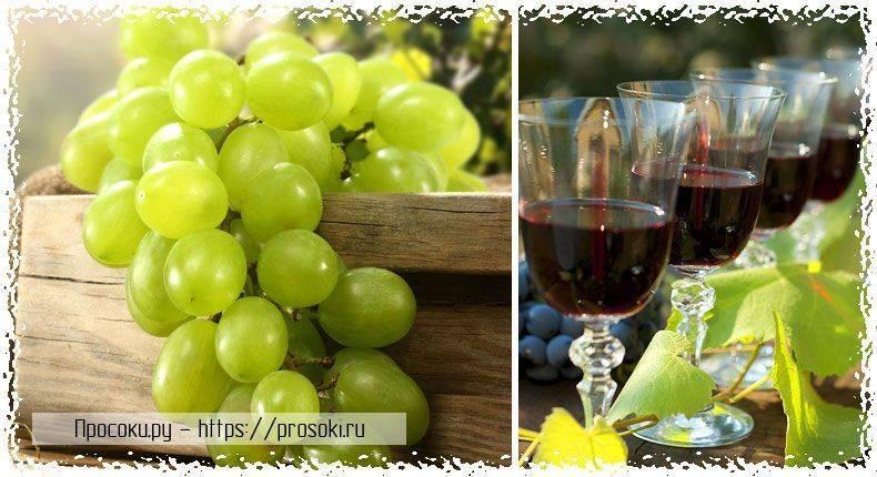 Вино из сока винограда в домашних условиях