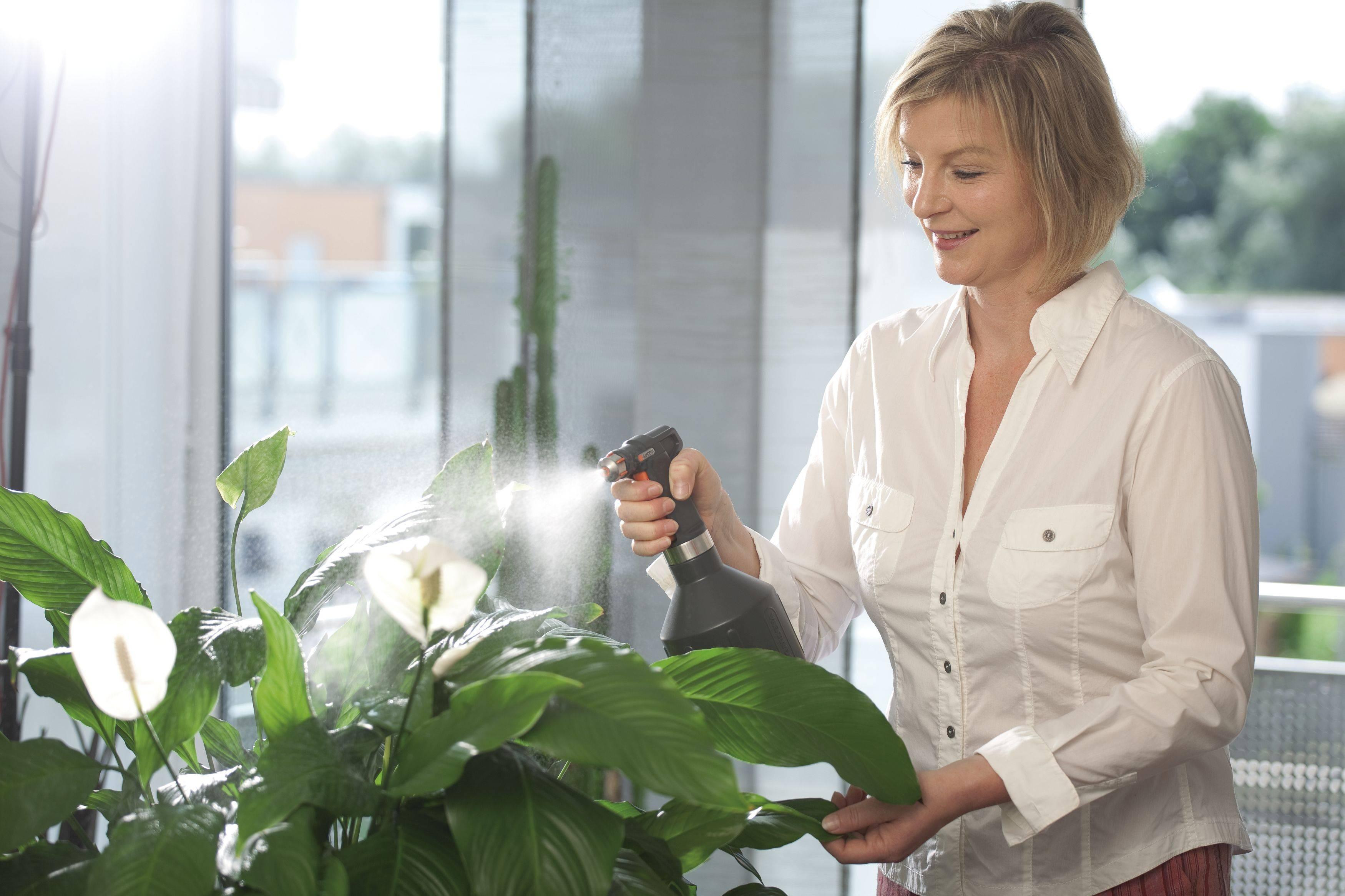 Зола для комнатных растений применение