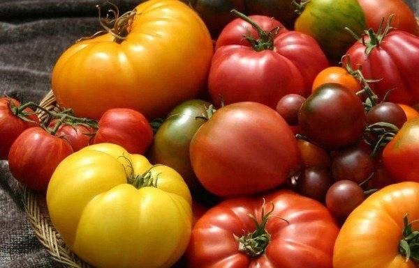 Бельгийский гигант томат