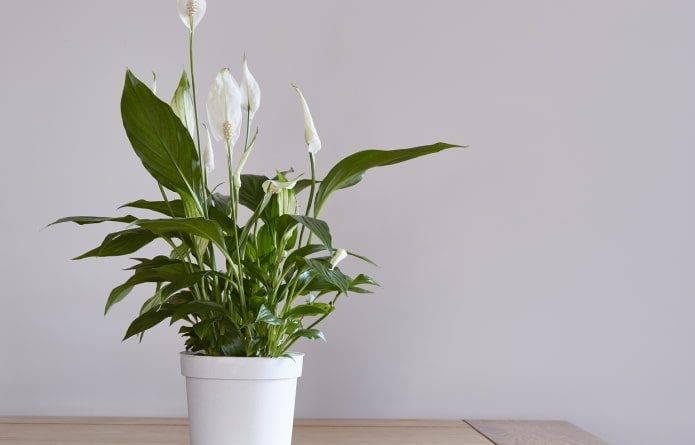 Какие растения растут в тени дома