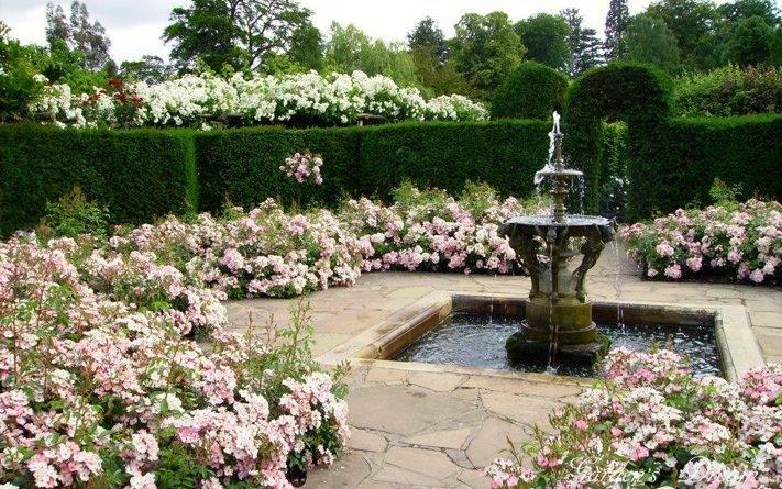 Парковые розы в ландшафтном дизайне фото