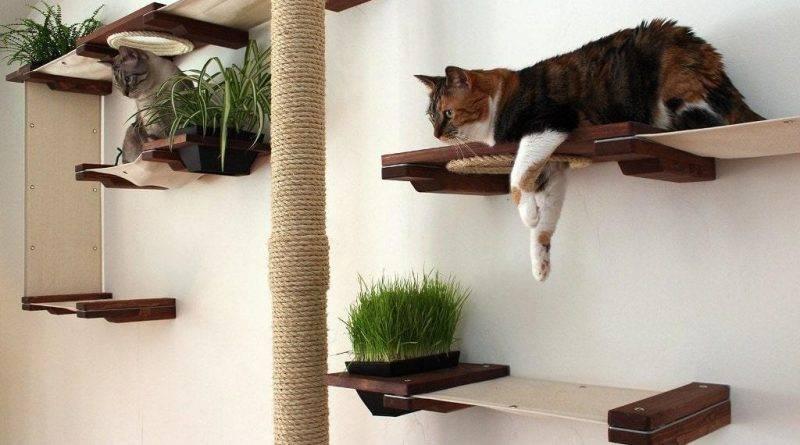 Что нужно для кошки