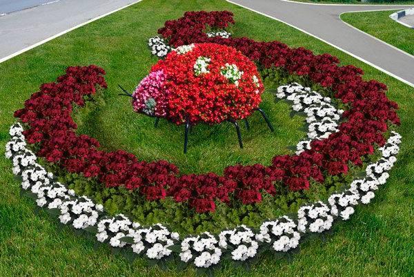 Красивые цветы для сада цветущие все лето
