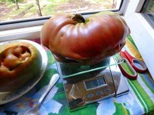 Семена томатов от кулика