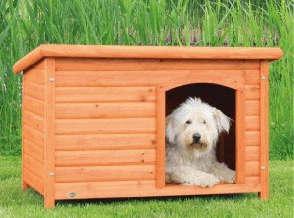 Как содержать собаку в частном доме