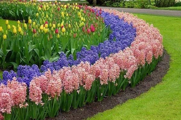 Бордюрные растения фото и названия