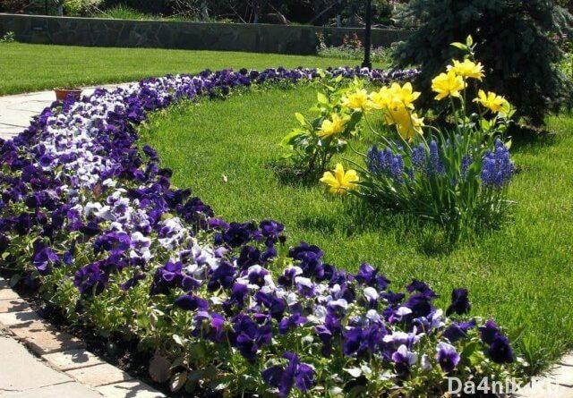 Самые неприхотливые цветы для дачи многолетники фото