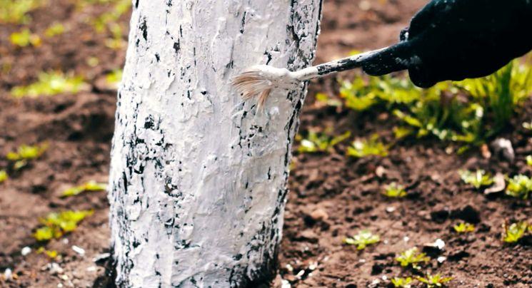 Чем побелить деревья в саду