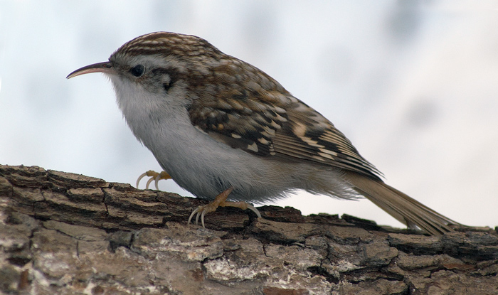Какие птицы живут в скворечниках