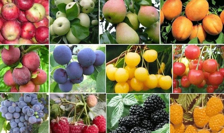 Плодовые растения для сада