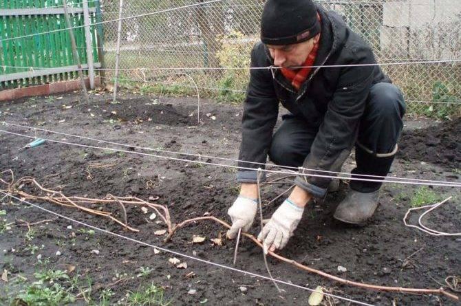 Пленка для укрытия винограда