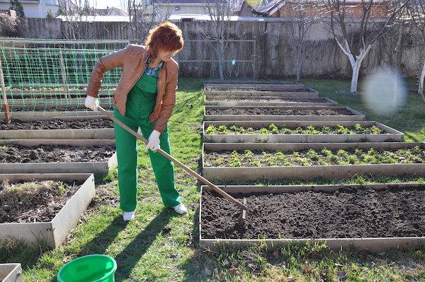 Когда лучше копать огород осенью или весной