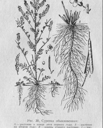 Многолетние сорные растения