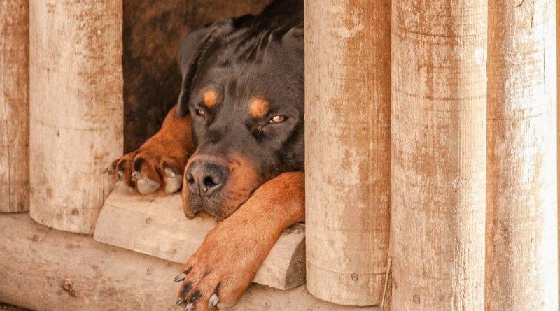 Собаки которые могут жить на улице