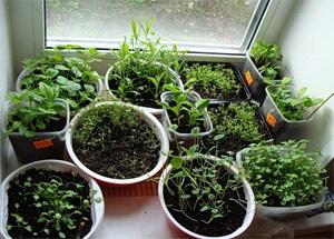 Выращивание рассады цветов в домашних условиях