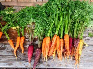 Улучшение плодородия почвы на садовом участке