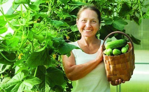 Семена огурцов для теплицы самоопыляемые ранние
