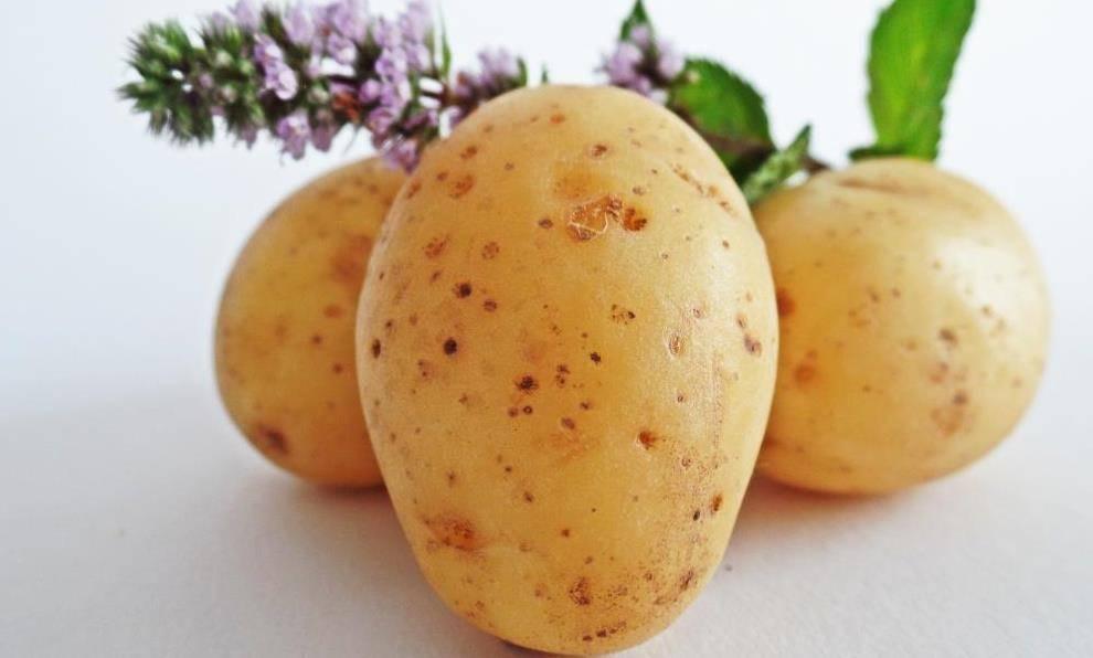 Блюда с картофельным пюре