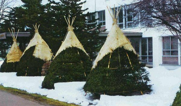 Как укрыть хвойные на зиму